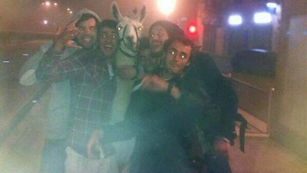 Drunk teens steal circus llama, take it for joyride http://t.co/CHyOlT928D http://t.co/iyvgMqy1wV