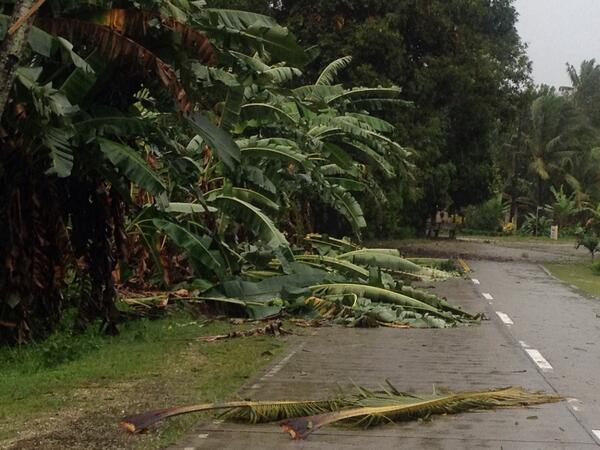 Mga puno ng saging na nabuwal sa gilid ng highway sa Candijay, Bohol. @DZMMTeleRadyo http://t.co/pJrPUneJE5