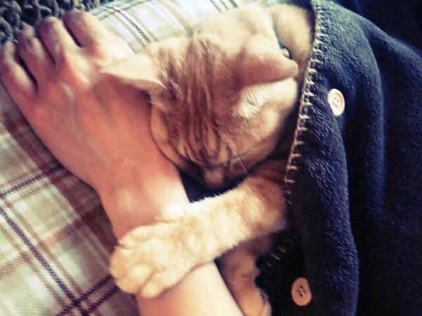 @CatCutePhotos 「眠るまで側にいて♡」 pic.twitter.com/Nf3ispXuMx