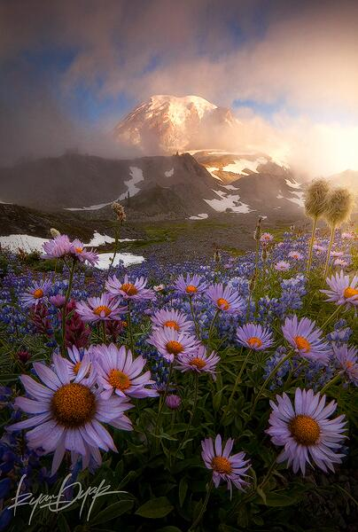 Twitter / zaibatsu: Weather the Storm by Ryan Dyar ...