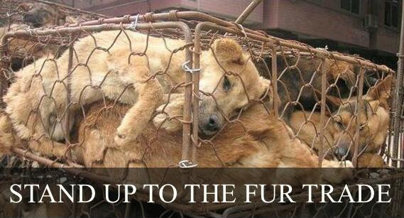 Save a life 2day ❤ Make a lifesaving gift to end this cruelty on fur farms: http://t.co/SipClKu3kX http://t.co/9Rv0S86ndg