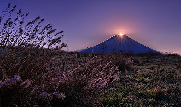 今朝のダイヤモンド富士。あたり一面、霜が融けて宝石のように輝きはじめました。