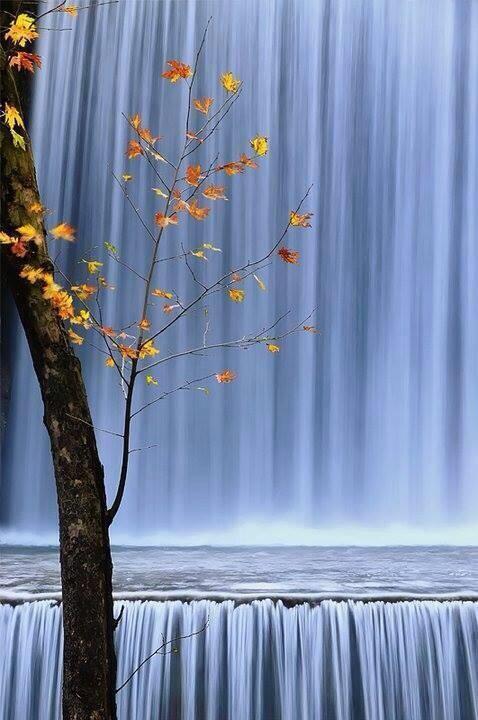 ... Y caen las hojas, llega ....¡¡¡ EL Otoño !!! - Página 8 BZTyt4oCQAAKSX8