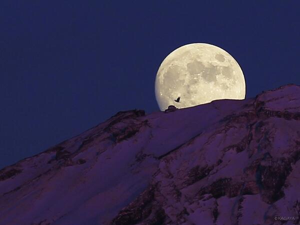 富士山頂、夕暮れのドラマ。 一昨日の富士山頂から昇る月です。一部始終を撮影していた動画から鳥が横切った1コマを抜き出しました。富士がほんのり明るいのは月光ではなく夕日の残照によるものです。