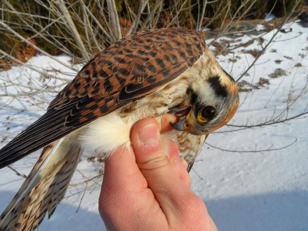 #2 And sometimes #ManicureMonday looks like this. A bloody experience #kestrels #womeninscience http://t.co/ITQ80dZz5R