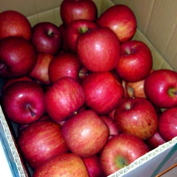 り、りんご!もらいすぎ!! http://t.co/woMIFNIpMR