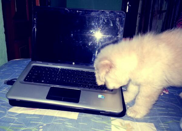 Abby my #goldenRetrievrer puppy likes to turn on the laptop for me. <br>http://pic.twitter.com/HRE9PwueG1