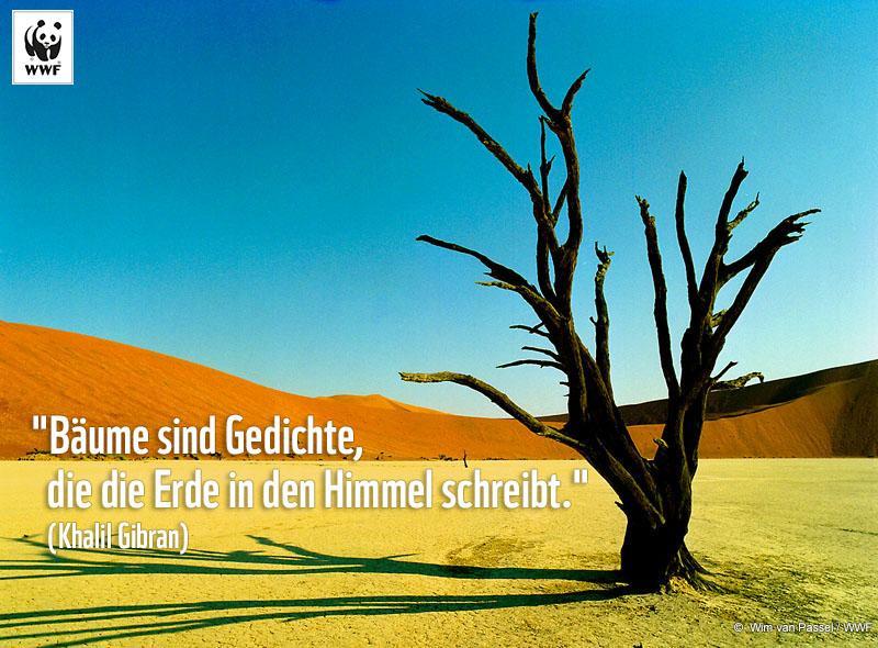 Wwf Austria On Twitter Zitat Zum Sonntag Bäume Sind