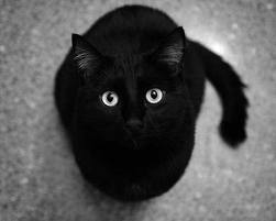 It's Friday the 13th.  Remember, if a black cat crosses your path, it's a sign that the kitty is going somewhere. http://t.co/VLg0FXzcib