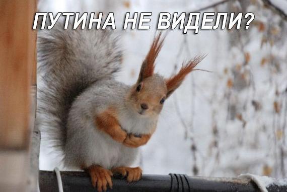 Только всеобъемлющие санкции способны заставить Россию сесть за стол переговоров, - Карпентер - Цензор.НЕТ 2897