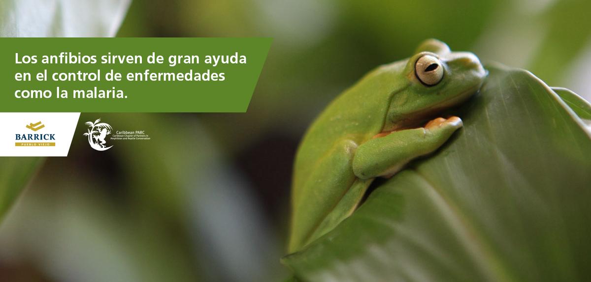 En Barrick Pueblo Viejo promovemos la conservación de la fauna y la flora, en el país y el Caribe. http://t.co/0Bd2D5tQE1