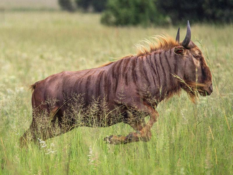 Big Game Population Soars in SA as Rich Guys Pay to Shoot Mutant Wildebeest: http://t.co/o8aR8rF2Yz http://t.co/IrC6CSsdnl