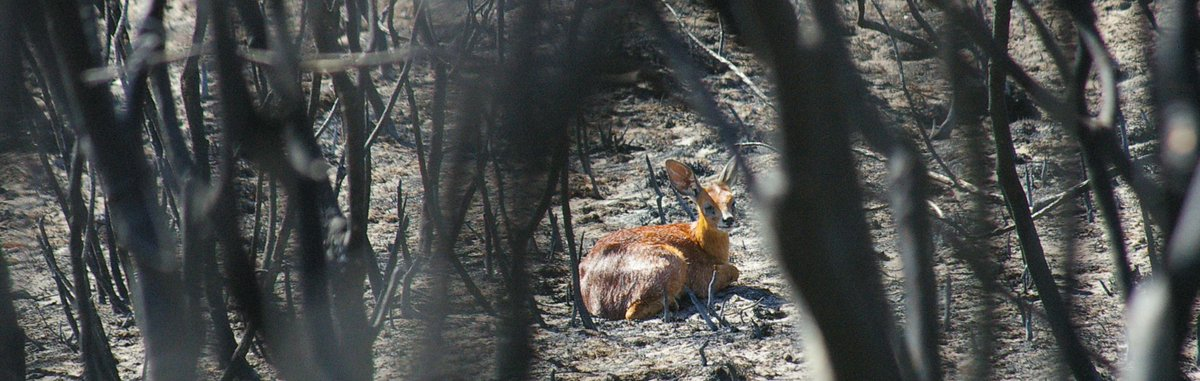 raise funds for @vwsfires & spca wildlife fighting #capefire this sunday at great wizoo --> http://t.co/AVqjwwnBZc http://t.co/xGHGm5JR4E