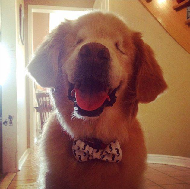 This Adorable Golden Retriever Born With No Eyes Is Now A Therapy
