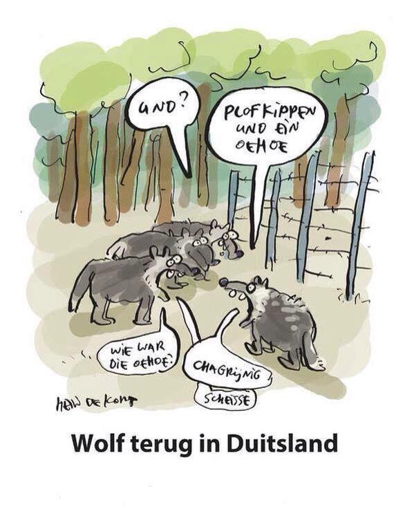 De wolf weer terug in Duitsland http://t.co/2NSdmBnMgN