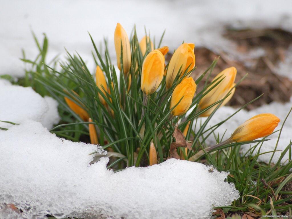 Картинки весны мартовские
