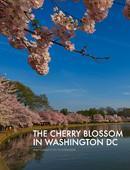 ebook Muslim tradition: studies in chronology,