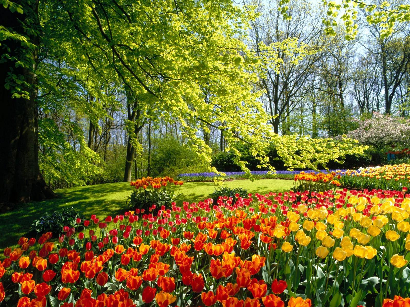 жидкие большие картинки весна на весь экран для