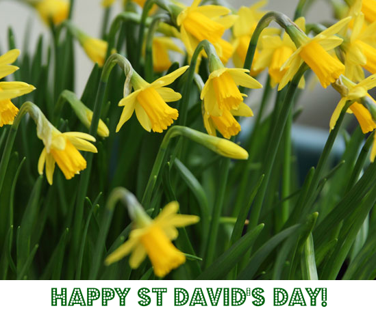 Happy St David's Day! Learn about Wales's national day with our free graded reader :-) http://t.co/ET9INlTyt6  #esol http://t.co/tmlyZrhmIx