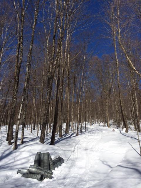 It's coming. The sweetest time of the year. #maplesyrup #sugaring #sap #vt #btv http://t.co/0q9Ujh257S
