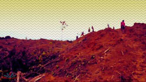 #WestPapua's rainforest being leveled for #PalmOil http://t.co/SPqi0bprvH #deforestation http://t.co/WTtX2sacWJ