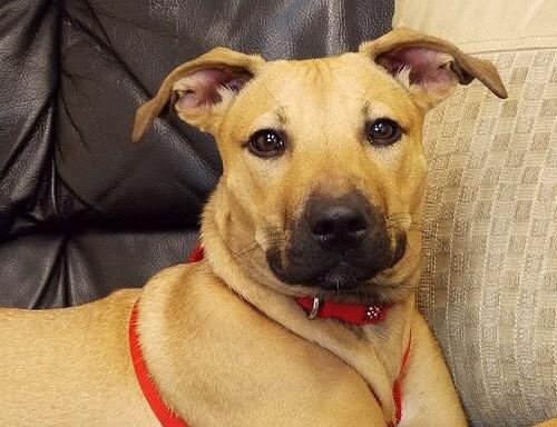 Come on people, we need to find honey a home. Thank you @KEY103 @radiochelsea @AmpikaPickston1 #AdoptDontShop http://t.co/pSMtxCX1hC