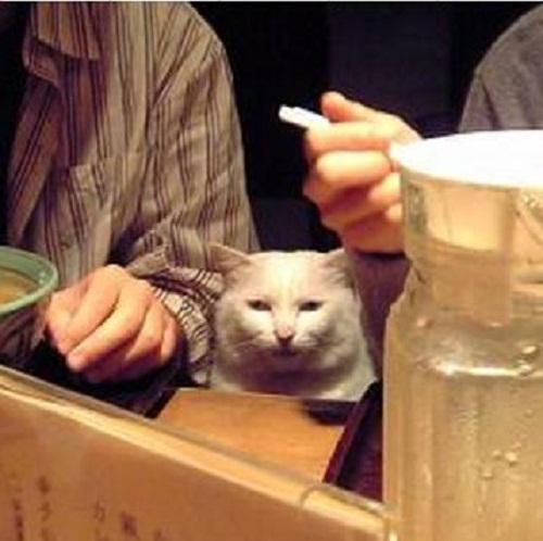 """""""@tatuya01: 煮込みと瓶ビールください http://t.co/maPmc6vawo"""" スゴイ顔ですね、、、(OvO)"""