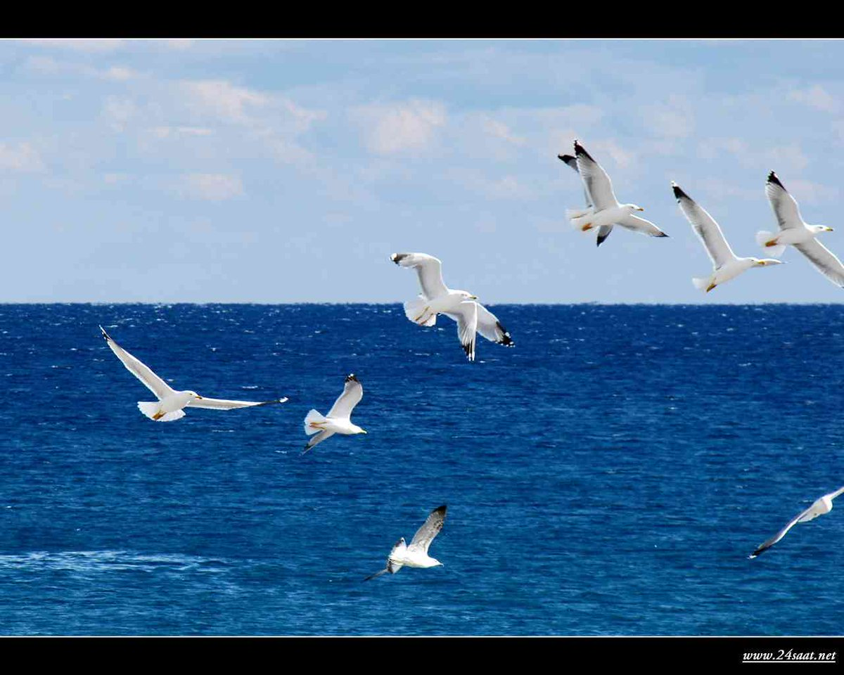 Праздником, картинки анимации чайки и море
