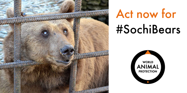 Please SIGN and SHARE the petition to free two defenceless bears >> http://t.co/UCot3NU2JJ http://t.co/Tju6b43V50