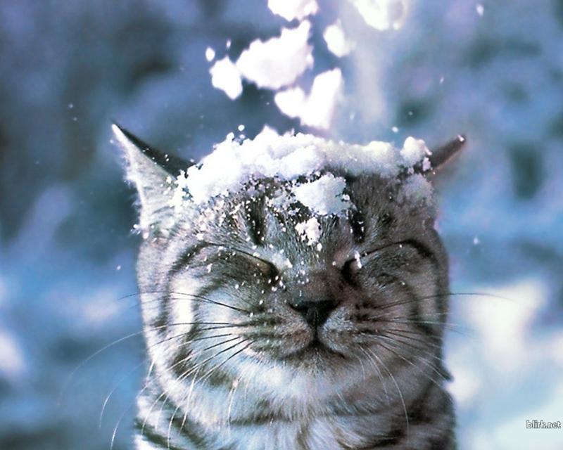 l'hiver ! - Page 2 B_GzByBWwAAnc3A