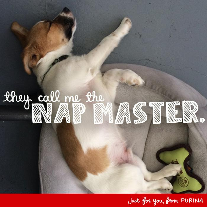 Office puppy already engaging with brands. RT @Purina: @contagious Do you think this nickname is fitting for Apollo? http://t.co/PX3hR3KNw0