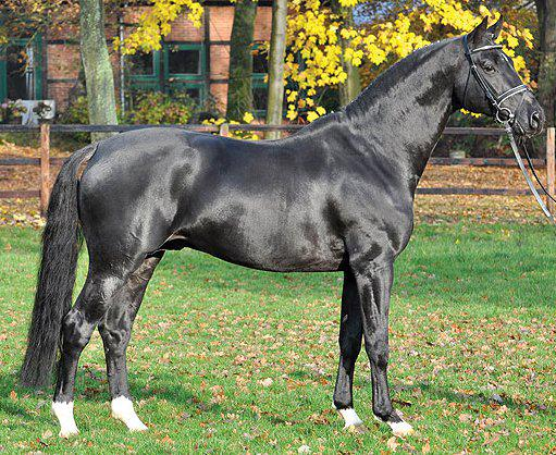 Equestrian Porn 25