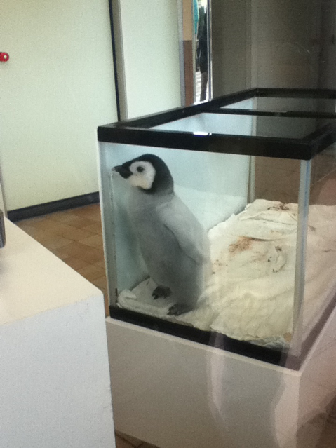 #ペンギンひな祭り http://t.co/rDq4flmV6p