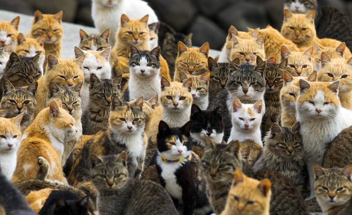 A Visit to Aoshima, a Japanese 'Cat Island' - 24 photos. The cats outnumber people by 6 to 1 http://t.co/CmPj603ITE http://t.co/KUuXEpKLGO