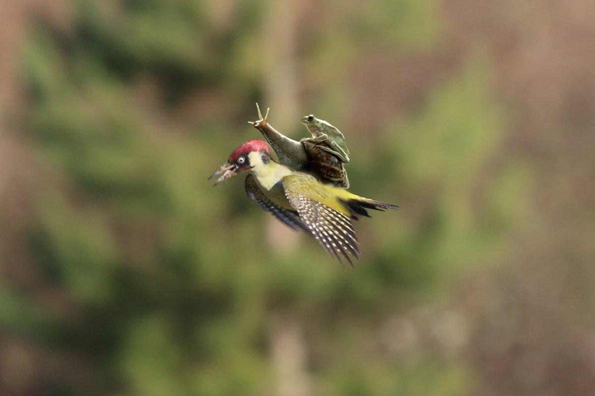 #WeaselPecker Quickly forest friends, to the secret lair! http://t.co/fiN0AfDTtc