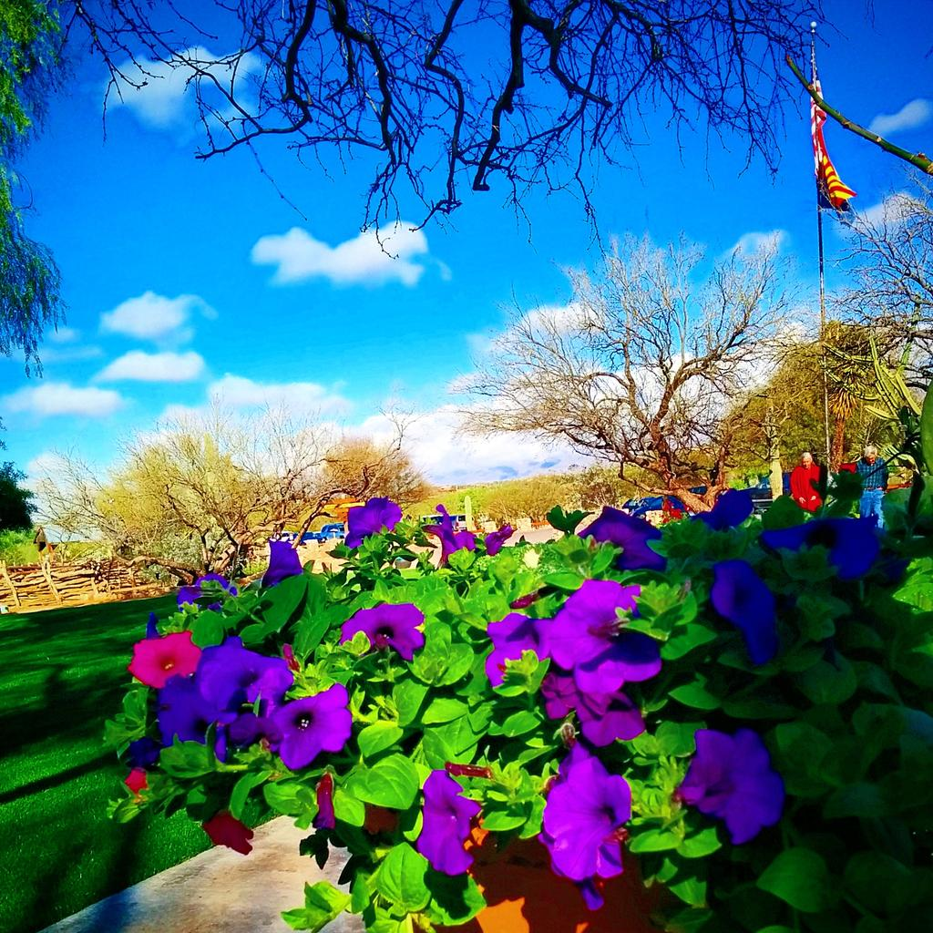 Arturo mcbutchart on twitter morning sunshine mi amor morning sunshine mi amor shireensandoval beautiful day in paradise tanqueverde pretty flowers for a pretty girl picitterhhbkxsfy7n izmirmasajfo