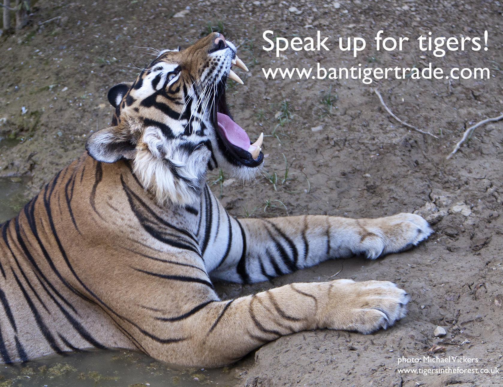 RT @TigerTimeNow: @DeborahMeaden pls RT for tigers on #WorldWildlifeDay & be #SeriousAboutWildlifeCrime with http://t.co/4mCUzRUt5U http://…