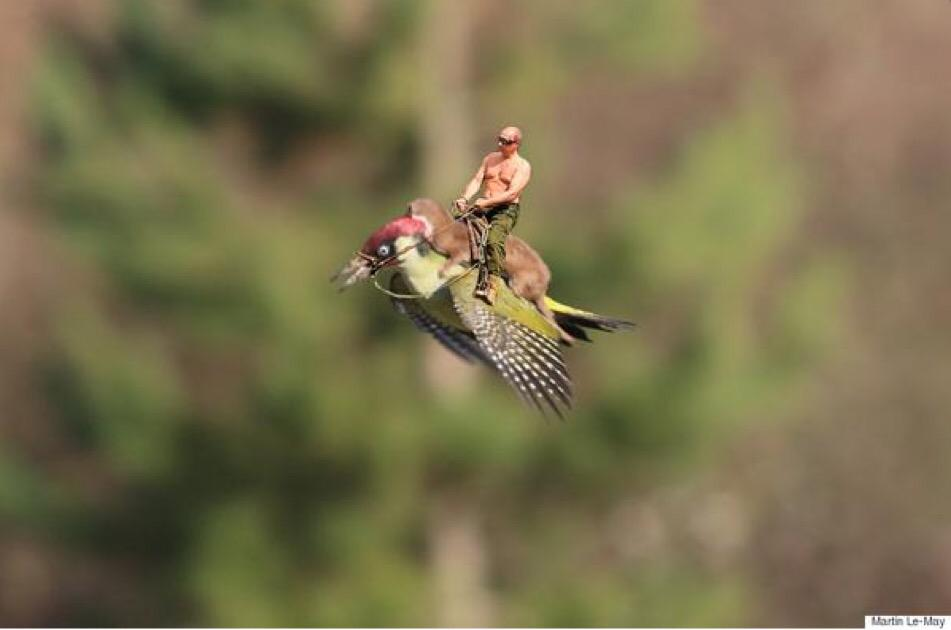 RT @ThePoke: Here's ANOTHER AMAZING picture of a weasel riding a woodpecker (h/t @sklueche) http://t.co/7yGDgHset4