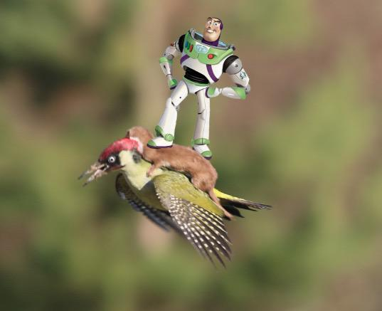 """@elliotwagland: To infinity and beyond.... #WeaselPecker http://t.co/mxstmqAsu8"" LOL!!"