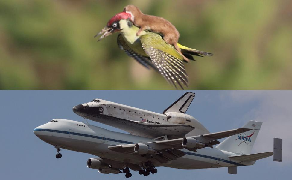 """@HowieTimberlake: ""@BBC_Future: See? Nasa really did invent everything. #WeaselPecker http://t.co/5tcXPFlpUc"" @NASA #NASAsocial"" No doubt!!"