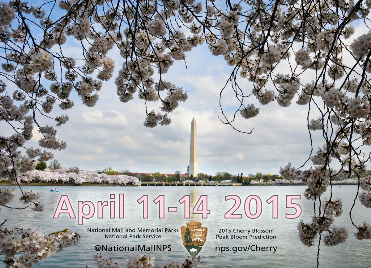 National Mall Nps On Twitter Peak Cherryblossom Bloom Dates Are