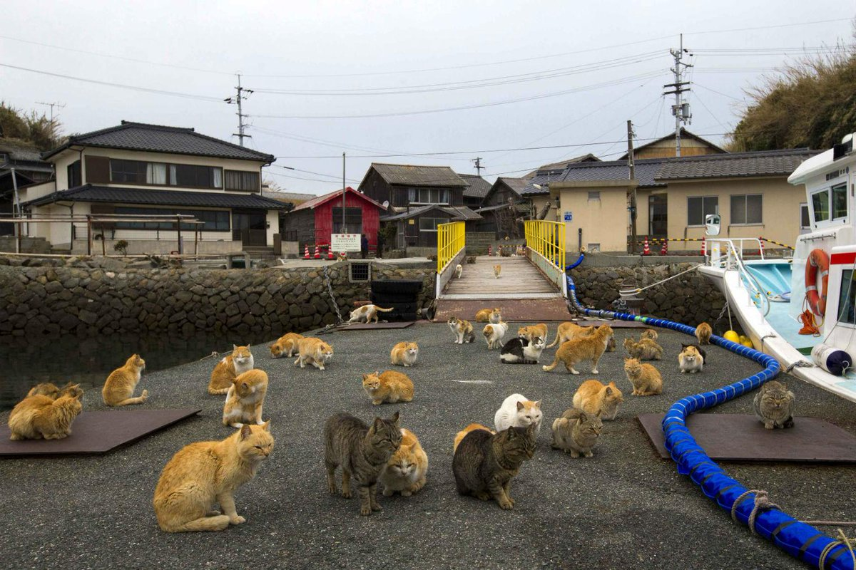 うわ~ネコウヨや RT @thei100: Cat Island is real http://t.co/42z6x3lcwn http://t.co/gPq8Wqom4K