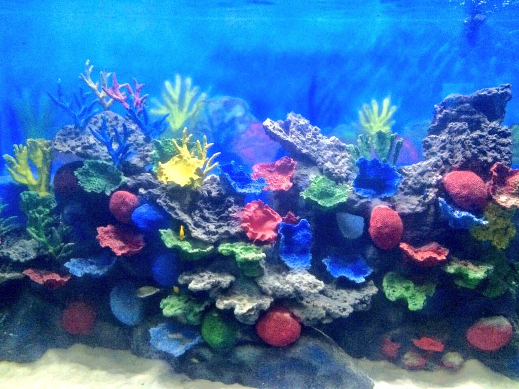 Fish aquarium tarapur - Make Way For The Brand New Faaantastic Incredible Taraporevala Aquarium Charni Rd Cannot Wait Mumbai Http T Co Ncnxqfgqh9