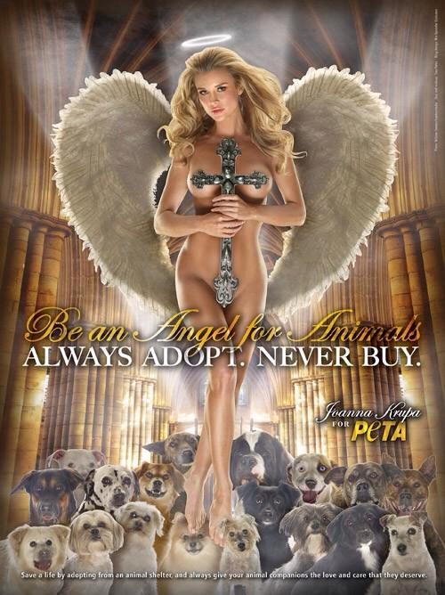 Help make it happen for my #animalrescue 'Angels for Animal Rescue' http://t.co/d6bc9rKFYD #indiegogo http://t.co/1YYChZHIY9