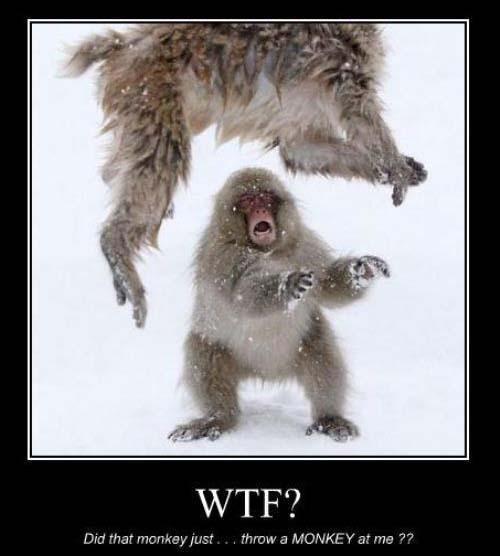 Monkey Memes Monkeymemes Twitter
