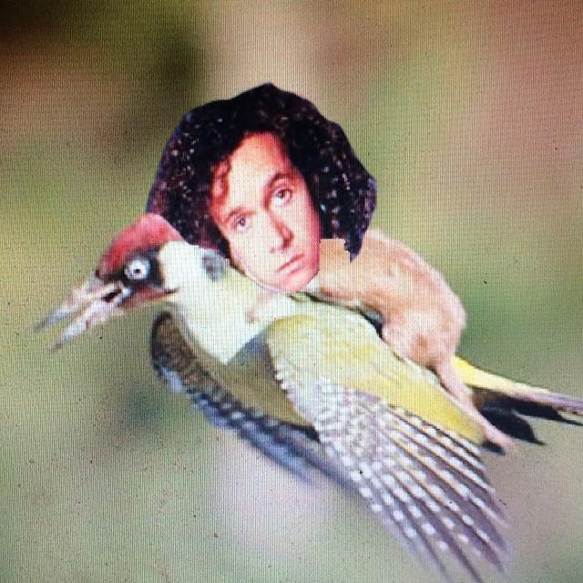 Have u seen that pic of the Weasel riding on the woodpecker yet? http://t.co/CwfI8M5rUo