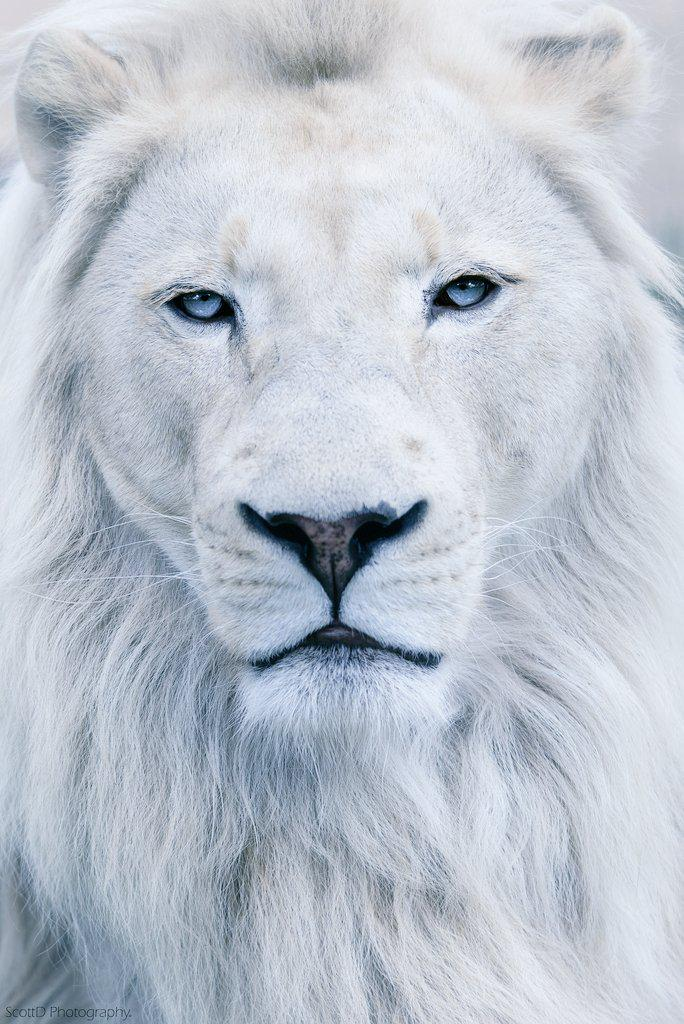 Never lose that flame in your eye. The lion never sleeps https://t.co/98NyD71VUK http://t.co/PeZuJlAV57