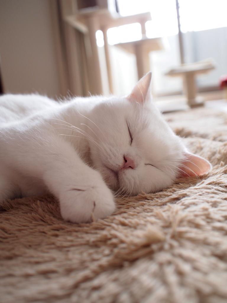 今日も世界中の猫ちゃんが幸せでありますように pic.twitter.com/valhs37D43