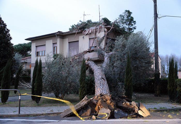#maltempo, già due morte nel centro Italia a #Lucca e #Urbino http://t.co/i9PrZJJZfa