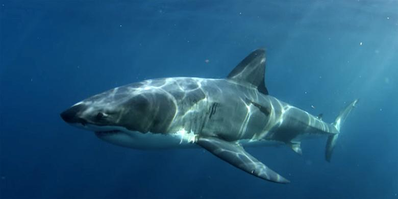 Don't Go In The Water: What Mysterious Sea Creature Ate An Entire 9-Foot Great White Shark? http://t.co/ABwGEravhH http://t.co/cnAPe69gPj
